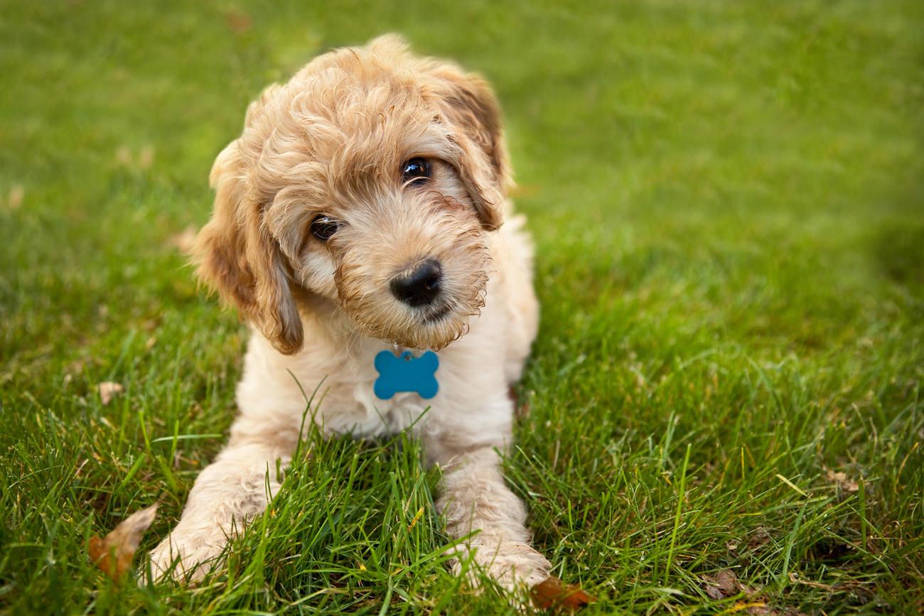 Benchtraining-met-je-pup