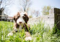 Maak-je-huis-puppy-proof