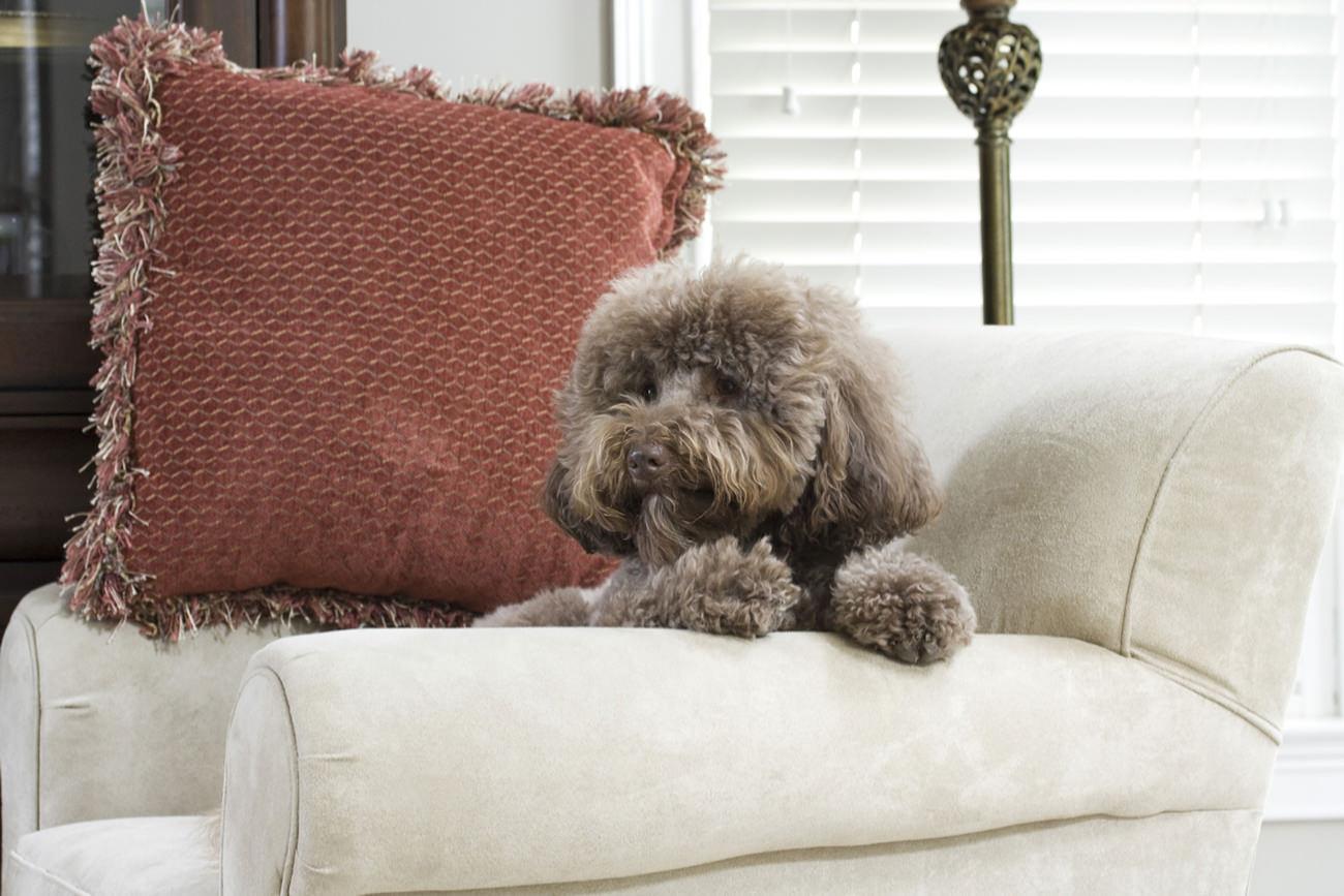 zindelijkheidstraining-pup-een-stoel