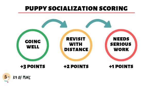 Puppy-scorelijst-socialisatie