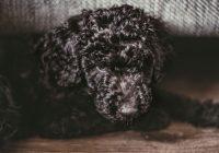 Meer dan 100 leuke hondennamen voor een reu en teef
