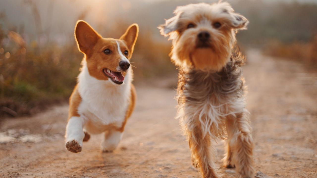 10 tips voor het welzijn van je Labradoodle of andere hond v2-min