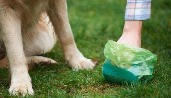 Honden-poep-opruimen