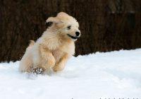 Zo ga je om met hyperactieve honden