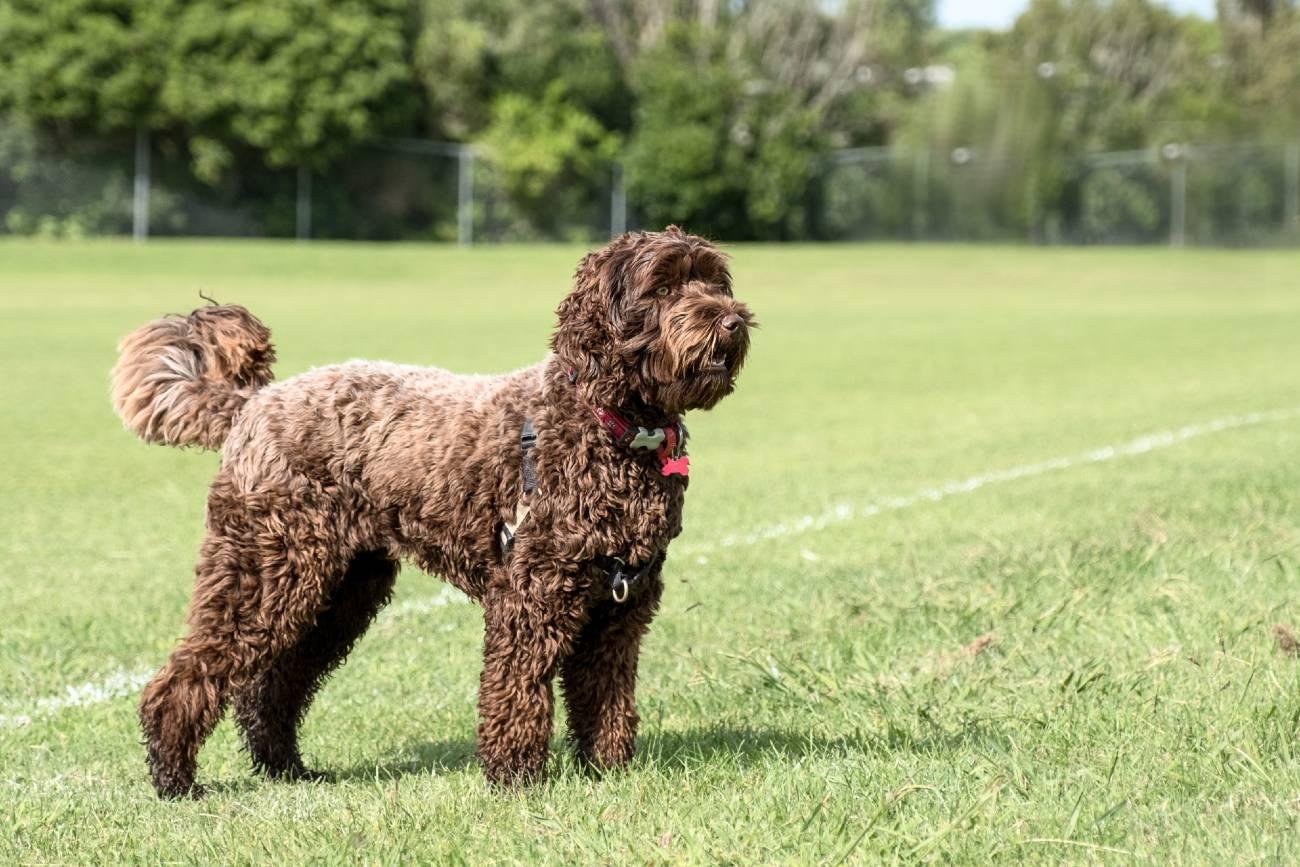 13 tips voor hondenspelletjes en je hond binnen bezighouden-min