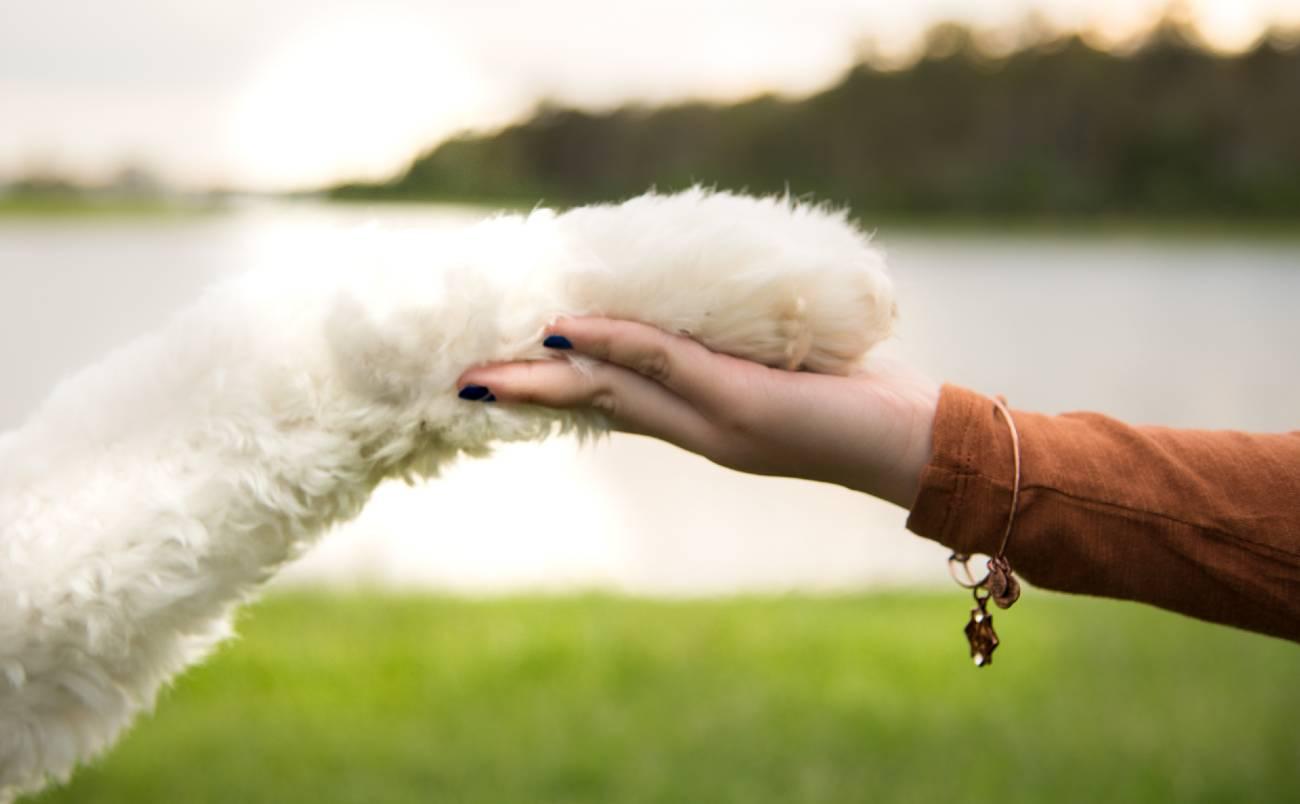 2 handige manieren om je hond te socialiseren-min