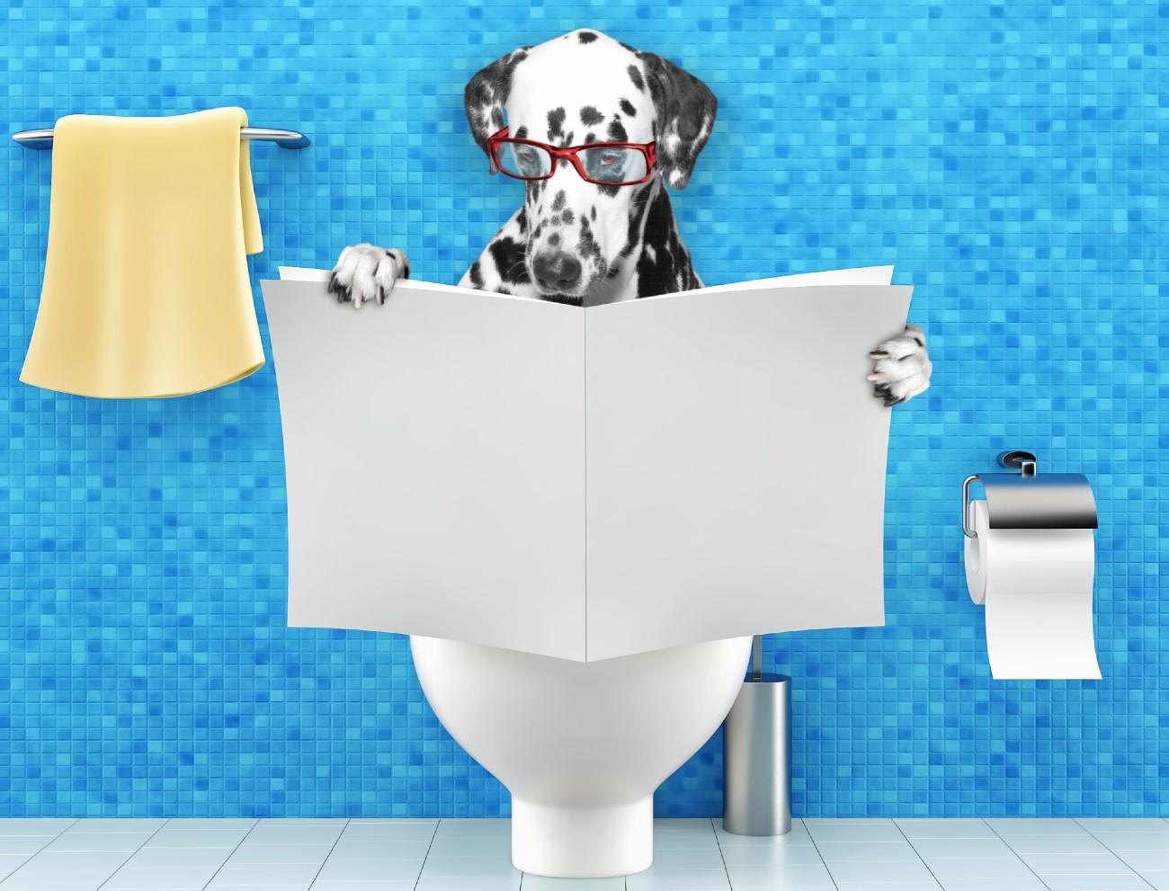 Labradoodle hond is aan de diarree v2