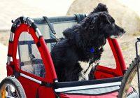Interesse in een hondenfietskar Lees mijn tips-min