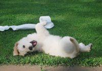 Mijn hond plast in huis; wat moet ik doen_-min