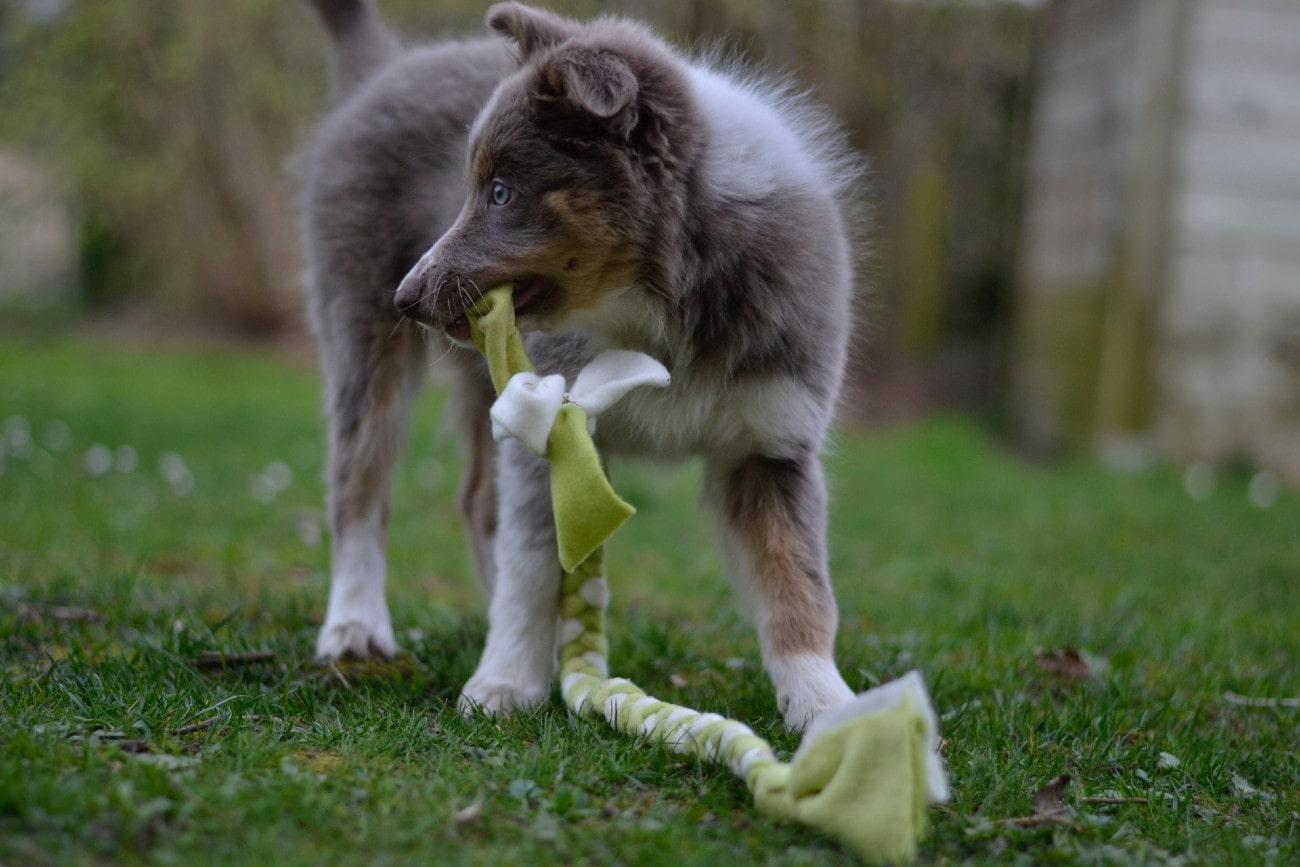 Puppy-met-touw-min