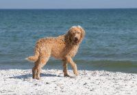 OCD bij honden; voorkomen is beter dan genezen